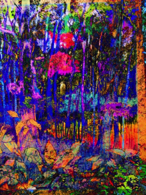Magic Forest, summer 2015, No. 1
